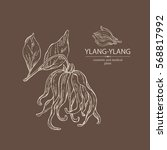 background with ylang ylang.... | Shutterstock .eps vector #568817992