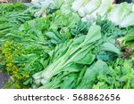 kale brassica alboglabra ... | Shutterstock . vector #568862656