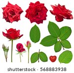red roses and green leaves... | Shutterstock . vector #568883938