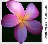 plumeria  vector illustration | Shutterstock .eps vector #56888638