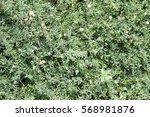 foliage green   Shutterstock . vector #568981876