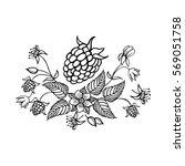 hand drawn raspberry isolated... | Shutterstock .eps vector #569051758