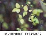 leaf after rain | Shutterstock . vector #569143642