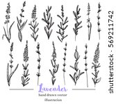 vector lavender hand drawn... | Shutterstock .eps vector #569211742