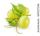 green grape. bunch of fresh... | Shutterstock . vector #569227246