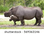 adult rhino with baby | Shutterstock . vector #569363146