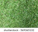 green grass background pattern... | Shutterstock . vector #569365132