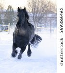 Small photo of Horse galloping on snow