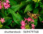 lime butterfly  papilio... | Shutterstock . vector #569479768