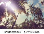 palm plantation on tropical... | Shutterstock . vector #569489536