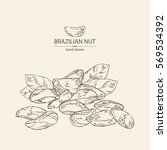 background with brazilian nut.... | Shutterstock .eps vector #569534392