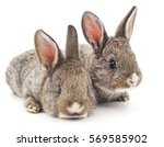 Two rabbits isolated on a white ...