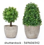 Set trees that decorate the room. Pot fake plant isolated on white