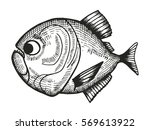 piranha fish cartoon sketch.... | Shutterstock .eps vector #569613922