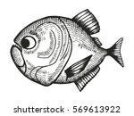 piranha fish cartoon sketch....   Shutterstock .eps vector #569613922
