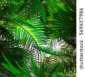 Background Green Palm Leaves....