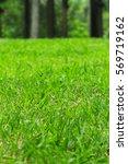photo of green grass field....   Shutterstock . vector #569719162