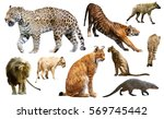 Set Of Wild Mammals Isolated...
