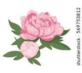 vintage peony flower vector... | Shutterstock .eps vector #569753812