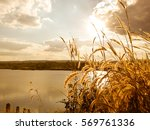 grass flowers with lake ... | Shutterstock . vector #569761336