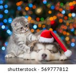 Stock photo playful kitten and sleepy puppy on a background of the christmas tree 569777812