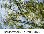 Dizzy  Abstract  Autumn ...