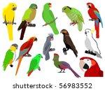set of parrots | Shutterstock .eps vector #56983552