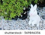 White Rabbit On White Gravel...