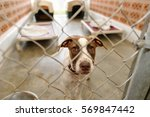 dog shelter is is a beautiful... | Shutterstock . vector #569847442