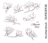 Magnolia Bloom Vector Set