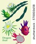 dragon fruit parts | Shutterstock .eps vector #570003658