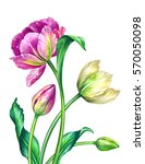 watercolor illustration ... | Shutterstock . vector #570050098