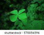 green clover with luck | Shutterstock . vector #570056596