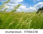 Green summer field covered by a grass and the beautiful blue sky - stock photo