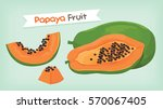 papaya fruit vector | Shutterstock .eps vector #570067405