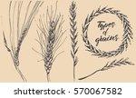 types of grains   Shutterstock .eps vector #570067582