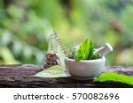 alternative health care fresh... | Shutterstock . vector #570082696