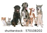 Group Of Pets In Front Of Whit...