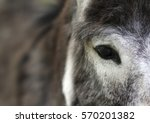 donkey eye close up. eye and... | Shutterstock . vector #570201382