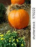 Fall Pumpkins   Pumpkins And...
