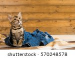 Stock photo kitten sitting on jeans and looking up 570248578