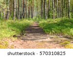Blurry Walking Trail In The...