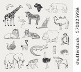 african animals vector... | Shutterstock .eps vector #570325936