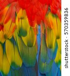 colorful feathers  harlequin... | Shutterstock . vector #570359836