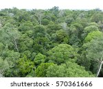 the amazon rainforest brazil... | Shutterstock . vector #570361666
