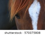 Stock photo horse 570375808