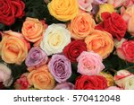 Multicolored Roses In A Floral...