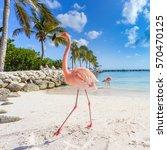 Three Flamingos On The Beach....