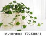 house plants | Shutterstock . vector #570538645