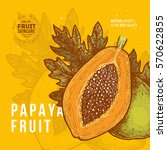 papaya fruit vintage design... | Shutterstock .eps vector #570622855